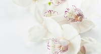 Pourquoi l'orchidée ?
